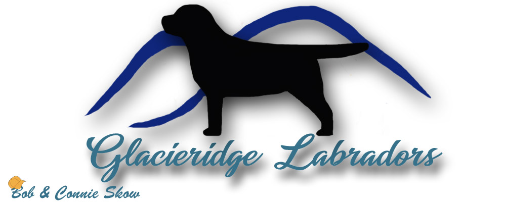 Glacieridge Labradors English Labrador Retrievers  Labradors  Delaware Chocolate Labradors Black Labs  Yellow Labs Breeders
